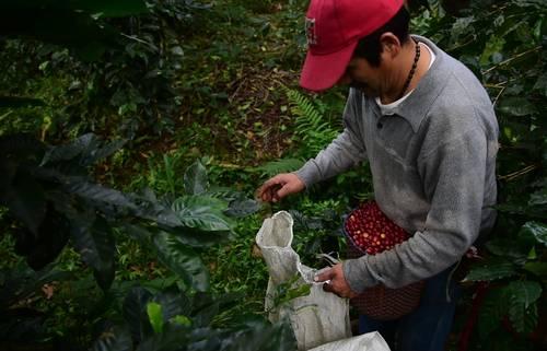 Caficultores de Veracruz piden consulta pública para instalar planta de Nestlé (La Jornada)