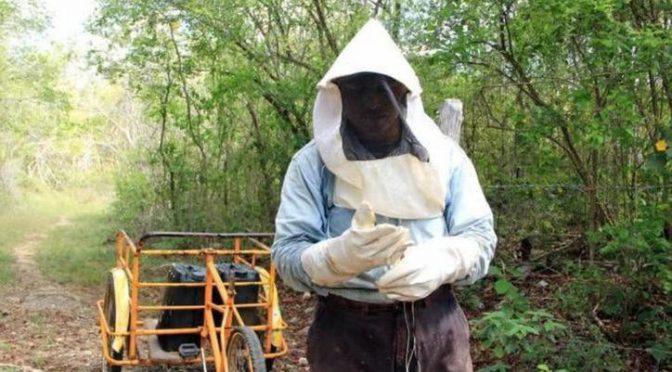 Falta de lluvias afecta producción de miel en Yucatán (SIPSE)