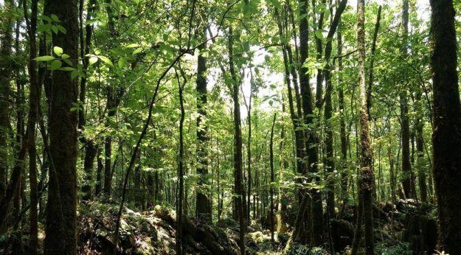 200 mil árboles en peligro en el Edomex por construir… ¿más casas? (CC News)