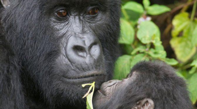 Ocho especies de animales que podrían desaparecer en 2019 (Crónica)