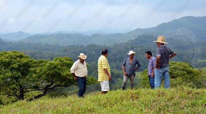 Arrasan con más de 15 mil hectáreas de selva en Las Choapas (Presencia)