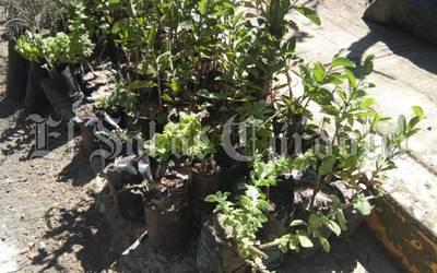 Veracruz: Buscan reforestar las zonas rurales (El Sol de Córdoba)