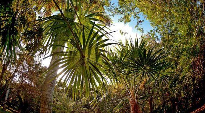 Quintana Roo: Desarrollo urbano, actividad humana e incendios amenaza para selvas tropicales de la Península (Palco Quintanarroense)