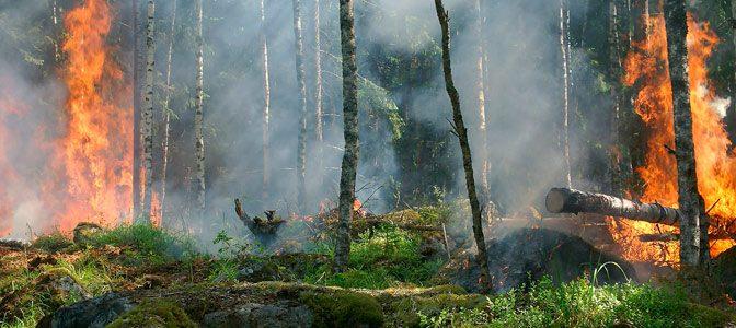Guadalajara: Ciencia contra los incendios forestales (CONACYT)