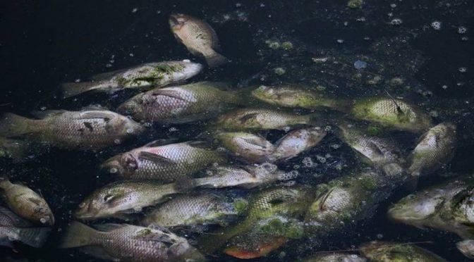 Gobierno debe luchar contra contaminación en la Huasteca (El Sol de San Luis)
