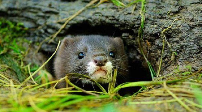 Más de 600 especies animales en peligro de extinción y que no se había detectado su retroceso exponencial (Ecoticias)