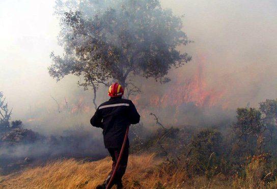Australia: El sotobosque necesita hasta 80 años para recuperarse de los incendios (Contacto Hoy)