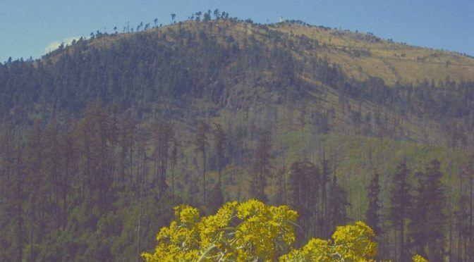 Desaparecerá bosque otomí y en su lugar construirán edificios (Ecoosfera)