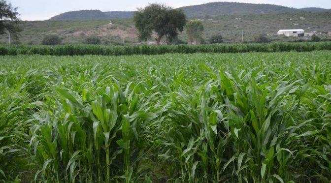 Ejido Santa Lucía afectado por falta de lluvia (El Sol de San Juan del Río)