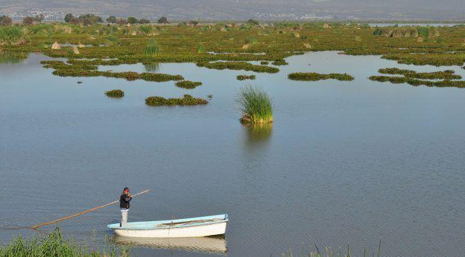 Guanajuato: Promete alcalde terminar con el lirio acuático (Periódico Correo)
