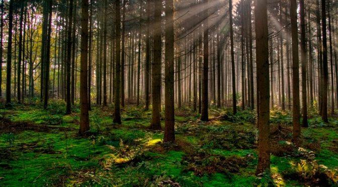 El agua, talón de Aquiles de los bosques ante el cambio climático (Ecoticias)