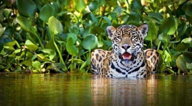 Tren maya: Cuidar la selva no es de Fifís (La Izquierda)