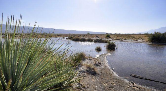 Coahuila: Al borde del colapso, el ecosistema de Cuatro Ciénegas (La Jornada)