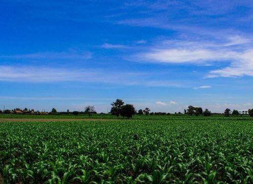 El gobierno del estado impulsa acciones inmediatas para el sector agropecuario de Puebla (Intolerancia)