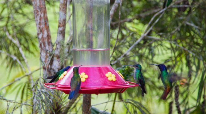 Salva familia González a colibríes del peligro de extinción (Periódico Correo)