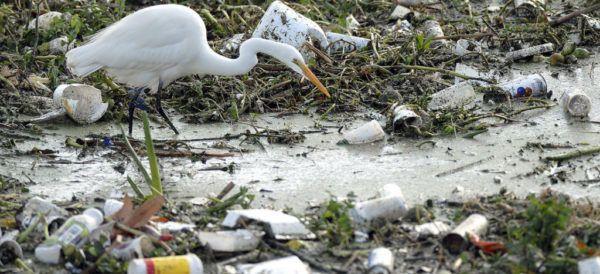 En 2025, por cada tres toneladas de peces habrá una de plástico en océanos (Aristegui Noticias)