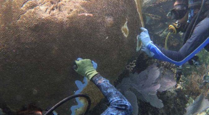 S.O.S. Arrecifes en peligro (Radio Formula)