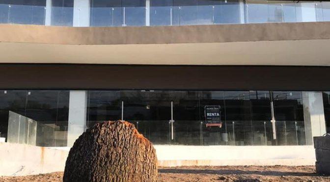Talan árbol para construcción de edificio en Centrito Valle (Milenio)