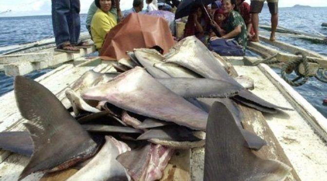 Legisladores de EU proponen prohibir la venta de aleta de tiburón (Vanguardia)