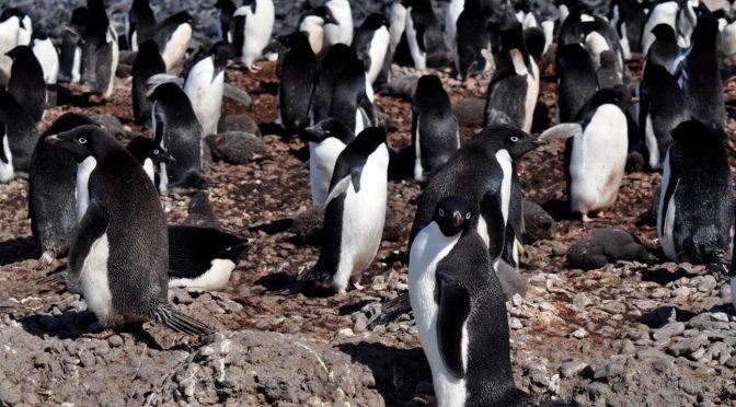Diario de a bordo: Testigos del cambio climático en la Antártida (Huffpost)