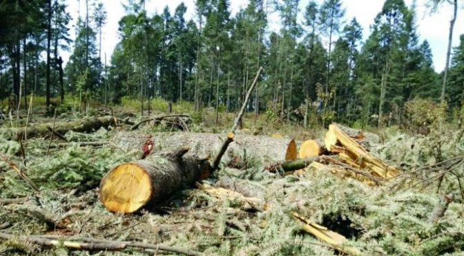 Aprueba Semarnat tala comercial del 33% de bosque del Nevado de Toluca (AlMomento)