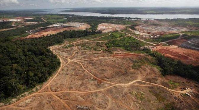 Noruega prohibió el aceite de palma que causa deforestación (La Verdad)