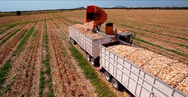 Producción de alimentos, el mayor desafío de sustentabilidad: experta (La Jornada)