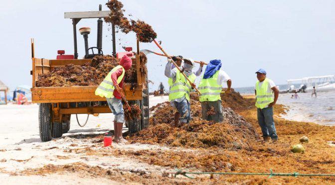 Investigarán impacto del alga sargazo en la región del Caribe (El Siglo de Torreón)