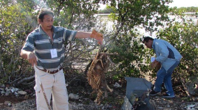 Yucatán: Unos 150 voluntarios limpian manglares (Diario de Yucatán)