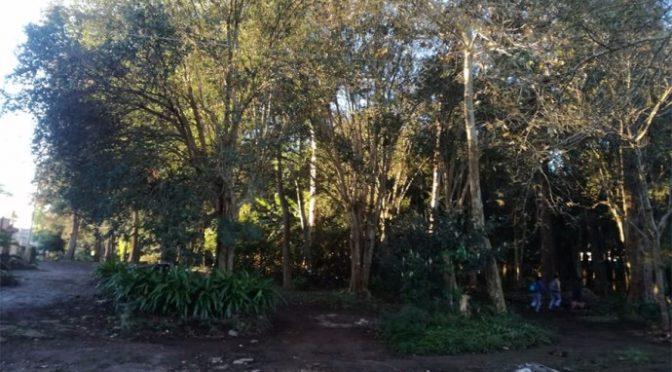 Vecinos de la colonia Maza de Juárez piden al alcalde de Xalapa suspenda tala de árboles en parque los Pinos (Plumas Libres)