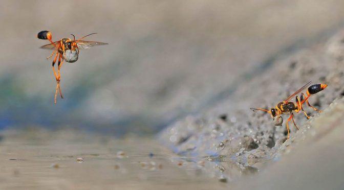 Insectos se extinguen a un ritmo de 2.5 por ciento (López Dóriga Digital)
