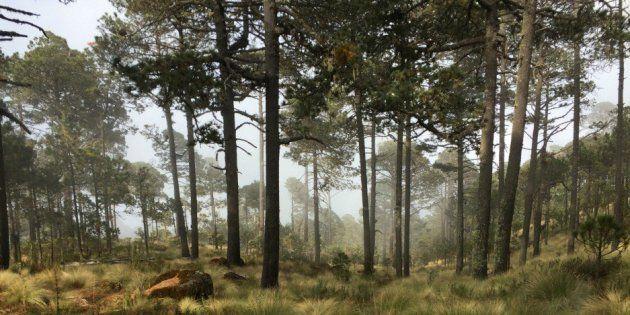 Ganó el medio ambiente: juez ordena suspender tala de 180 mil árboles (Huffpost)