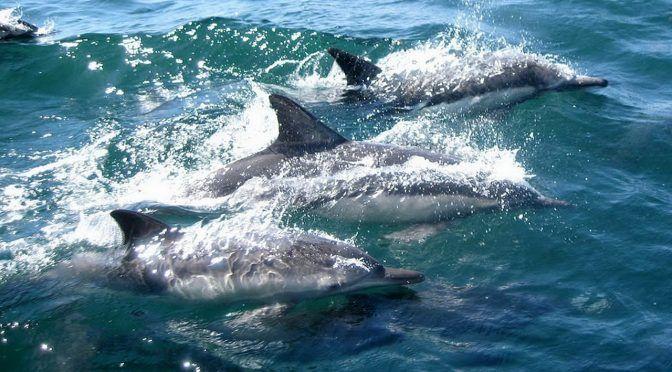 Todos los delfines, ballenas y focas analizadas en un estudio estaban contaminados con microplásticos (Newsweek)