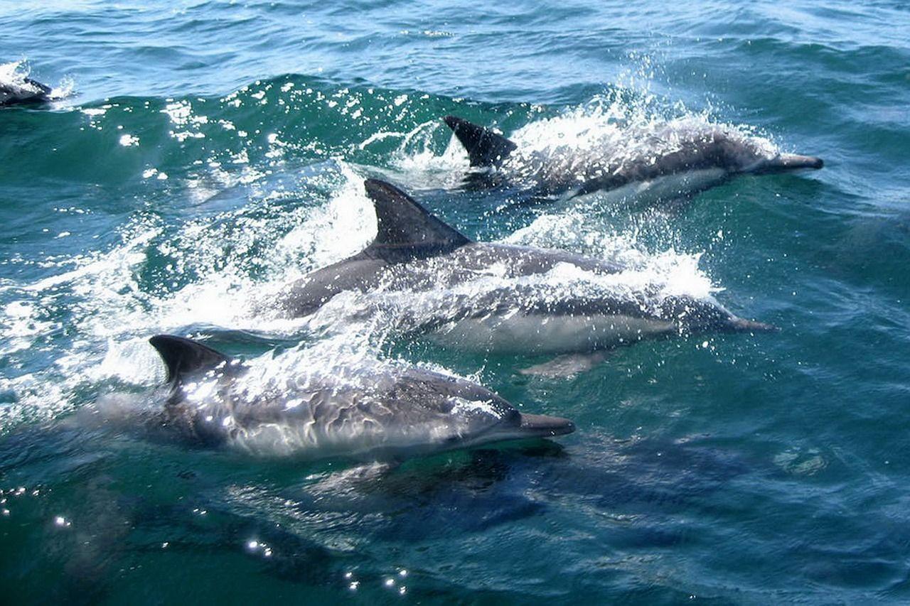 La población de delfines en el Océano Índico ha disminuido un 80% desde 1950 por las redes de enmalle (El Independiente)