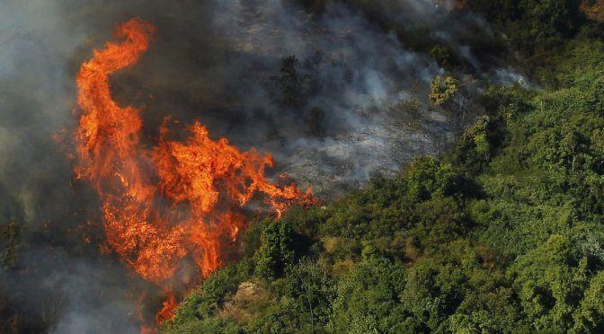 Diez mil personas sin agua potable a causa de los incendios forestales en La Araucanía (Coorporativa)