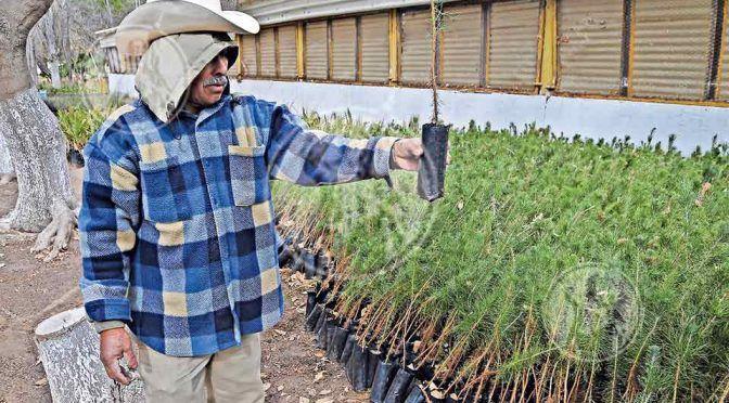 Reforestarán Juárez con 20 mil árboles (El Diario)