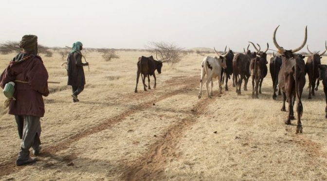 Los pastores del Sahel, de exploradores en busca de agua al satélite y el teléfono móvil (ONU)