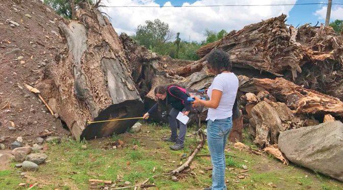 Hidalgo: Advierten crisis ambiental en Hidalgo (El Siglo de Durango)