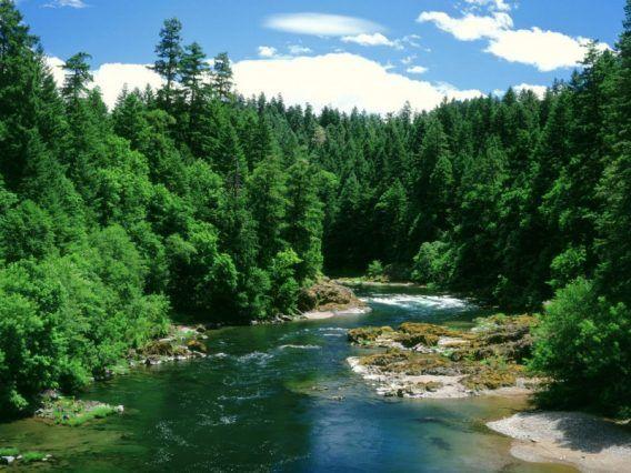 21 de marzo Día Internacional de los Bosques: hacia la conservación del agua y la vida.