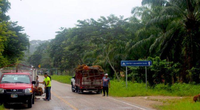Escasez de agua y alimentos: comunidades mayas muestran los efectos de la palma africana en Chiapas (Animal Politico)