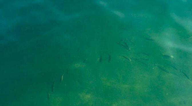 Especialistas de Ecología Marina toman muestras de agua y arena en Puerto Marqués (El Sol de Acapulco)