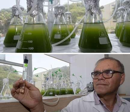 Expertos de Perú utilizarán microalgas para reducir la contaminación de lagos (La Jornada)