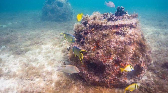 Yucatán: Así será el arrecife artificial de Progreso (El Financiero)