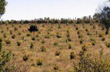 Michoacán: Hallan huertos ilegales de aguacate en zona de la Monarca (La Voz de Michoacán)