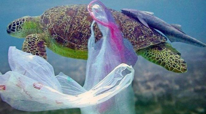Contaminados 90 por ciento de los ríos que desembocan del Golfo de México (Azteca Noticias)