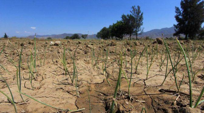 Oaxaca: Con la captación de agua de lluvia hacen resurgir Valle de Ocotlán (NSS Oaxaca)