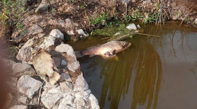 Buscarán a Gobiernos de Veracruz e Hidalgo para remediación de ríos en Huasteca (Plano Informativo)