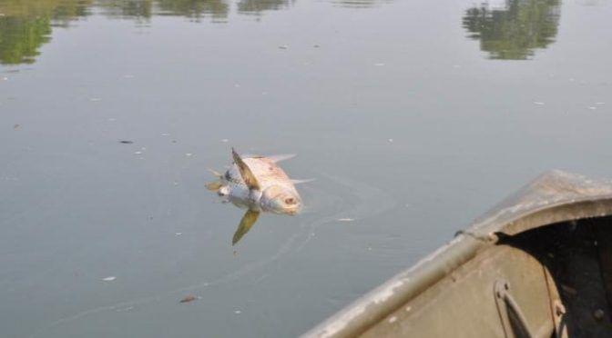 San Luis Potosí: Pescadores buscarán informar a AMLO sobre contaminación del río Moctezuma (Pulso)