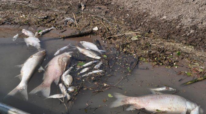 Veracruz: Prohíben consumir agua del río Pánuco (Milenio)