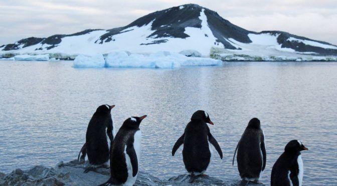 Día de la Tierra: protejamos las especies, cuidemos nuestra casa común (El País)
